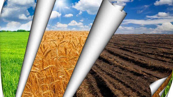 Agricultura din Romania – E nevoie de putin condiment