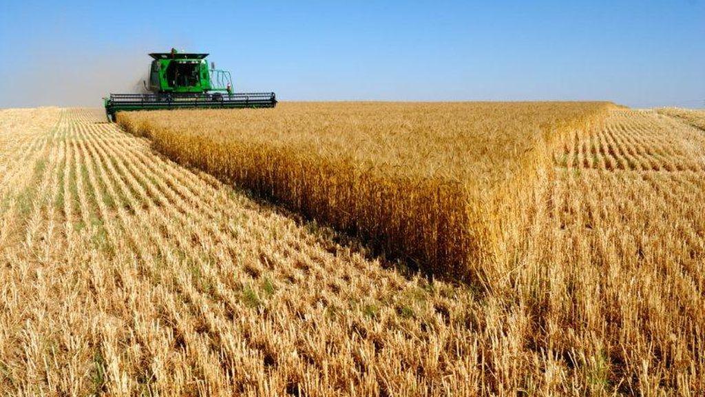 Agroland Agribusiness, companie  listata recent la Bursa, anunta afaceri in crestere cu peste 33%, in prima jumatate din 2021