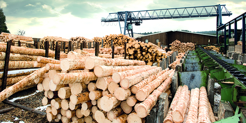 FORESTRY, TIMBER AND WOODEN PRODUCTS